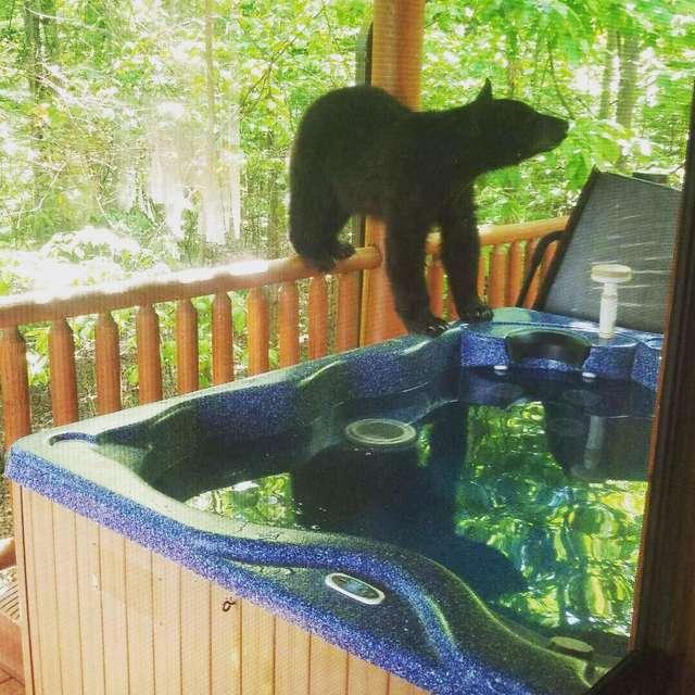 медвежонок в джакузи