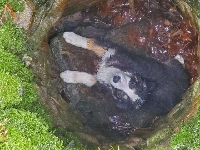 щенок в яме