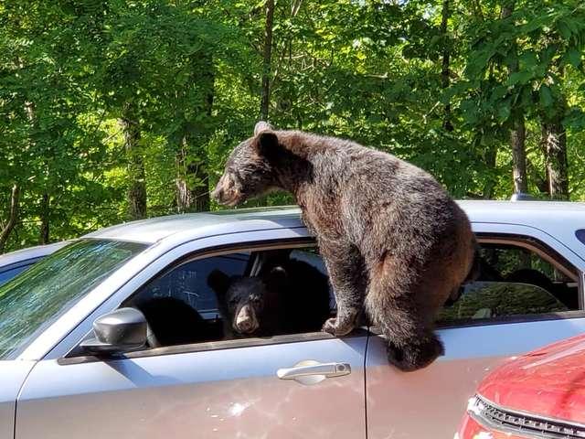 медвежонок и машина