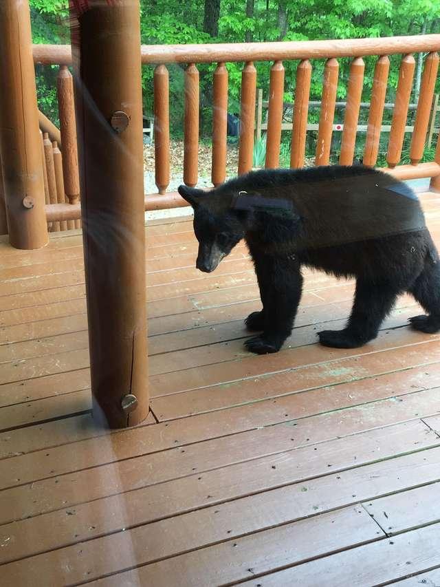 медведь на крыльце