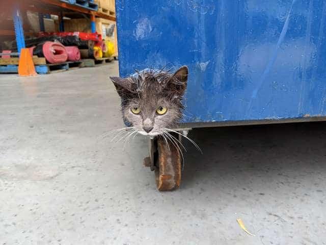 котенок застрял