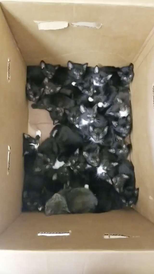 39 котят