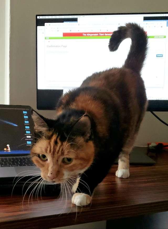 кошка у ноутбука