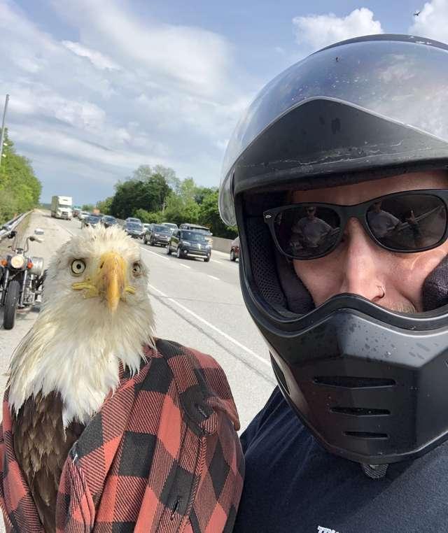орел и мужчина