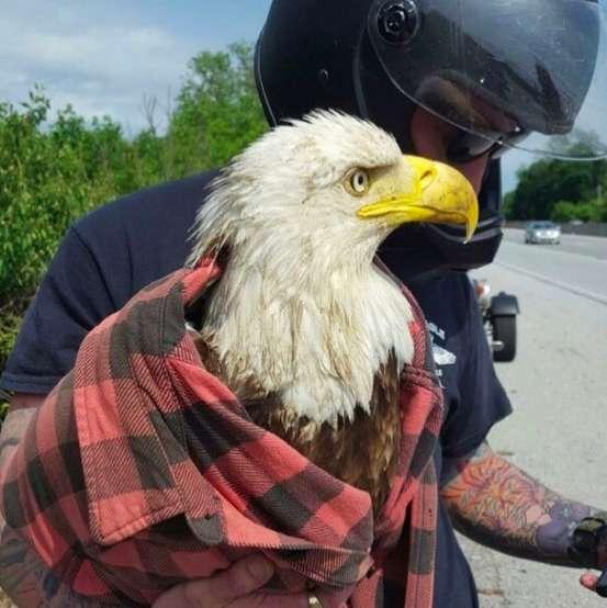 орел и человек