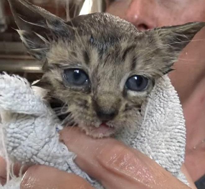 Помытый котенок