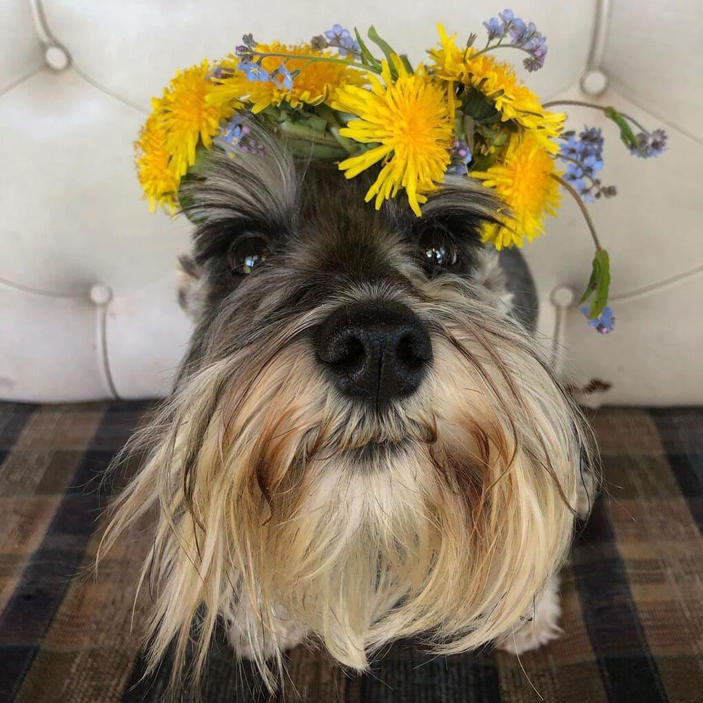 пес с цветами