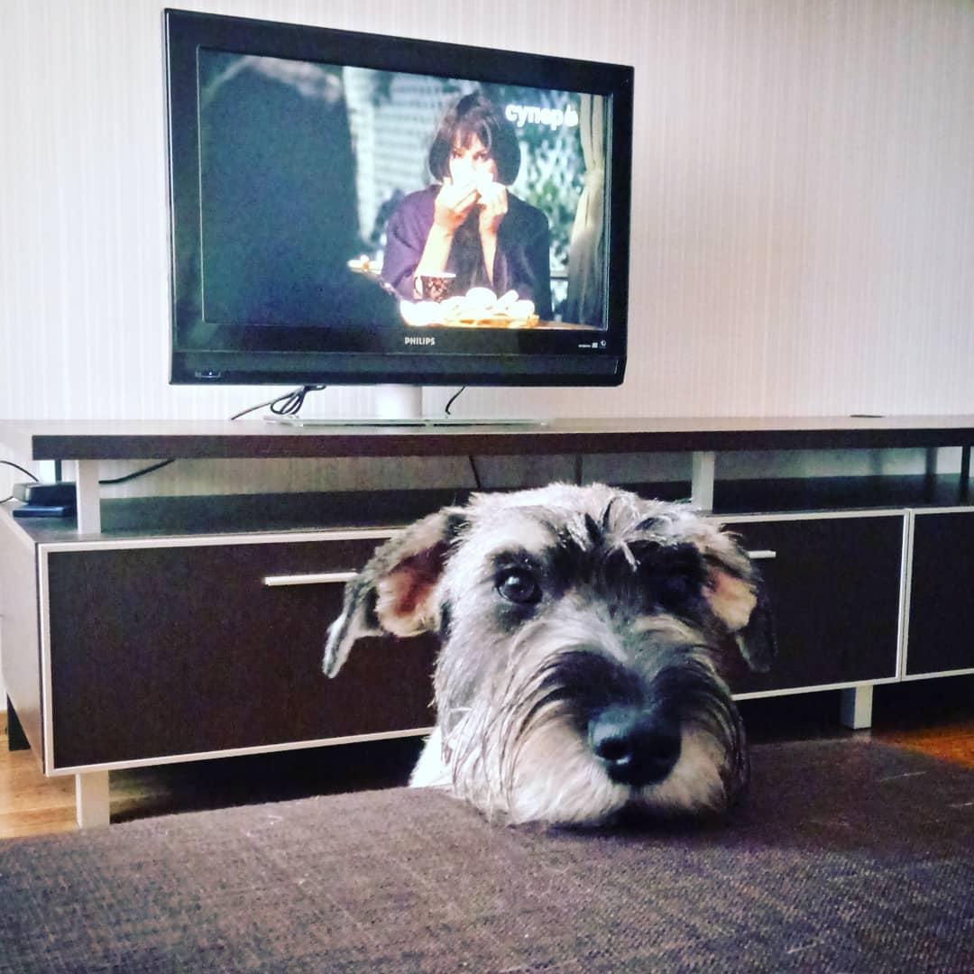 собака у дивана