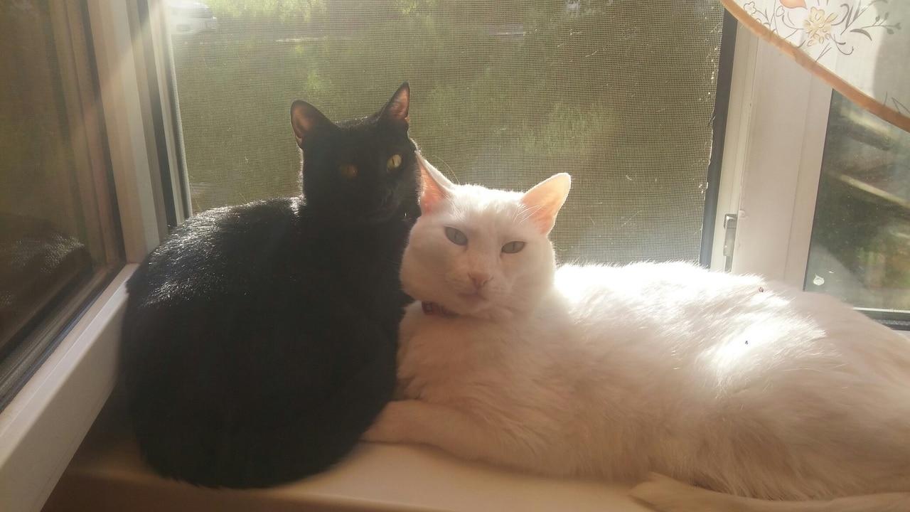 два кота на окне