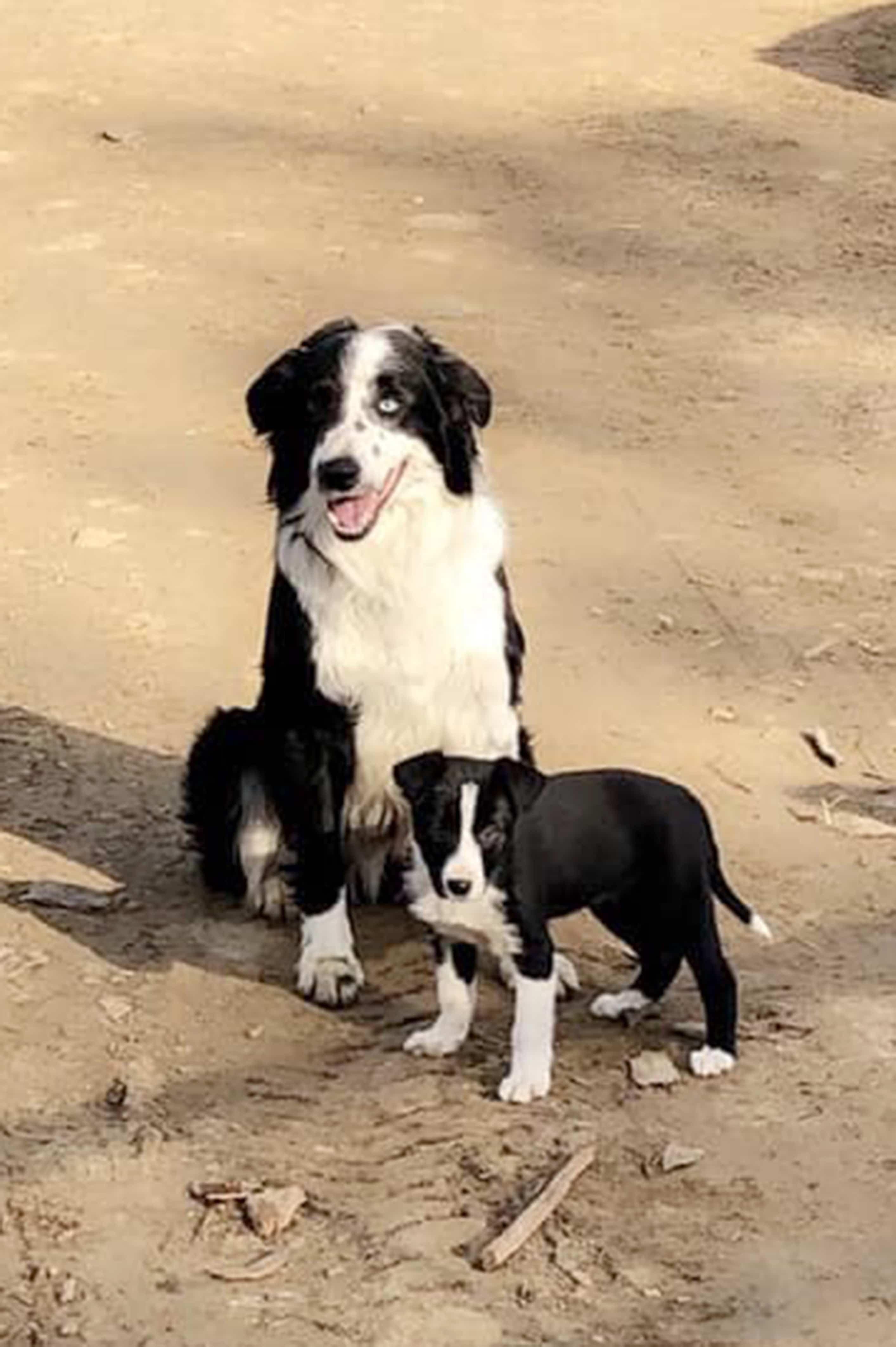 пес и щенок