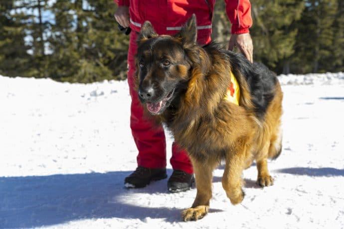 собаки-спасатели
