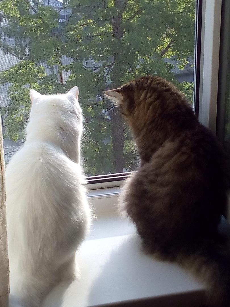 две кошки на окне