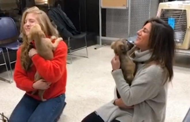 Девушки и собаки