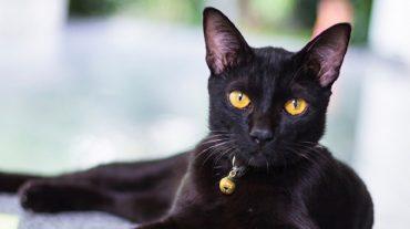 black cat Mia