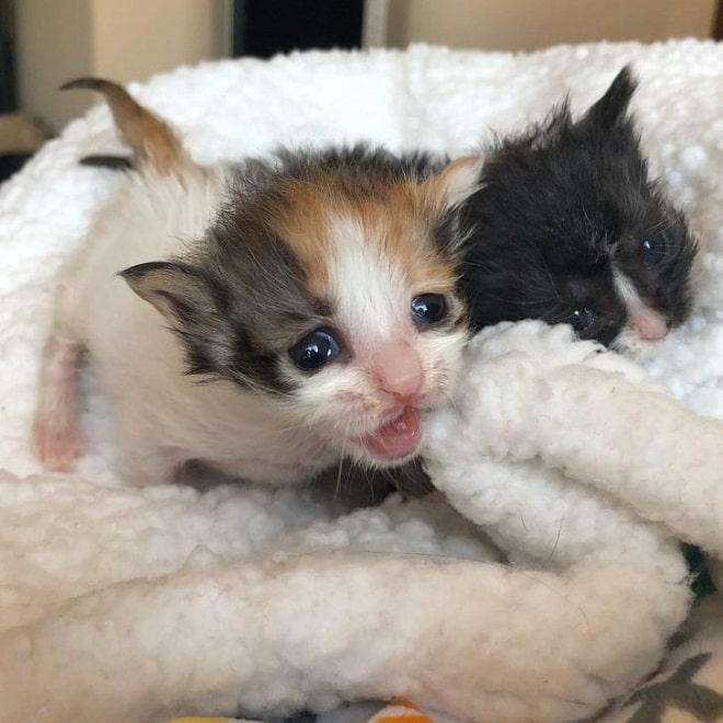 Котята и одеяло