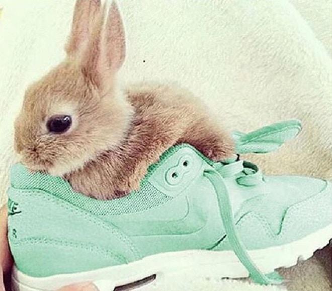 Кролик в кроссовке
