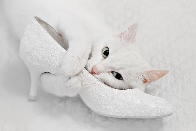Кошка и туфля