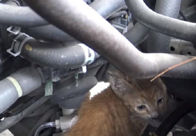 Котенок среди трубок