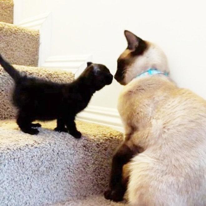Котенок на ступеньках