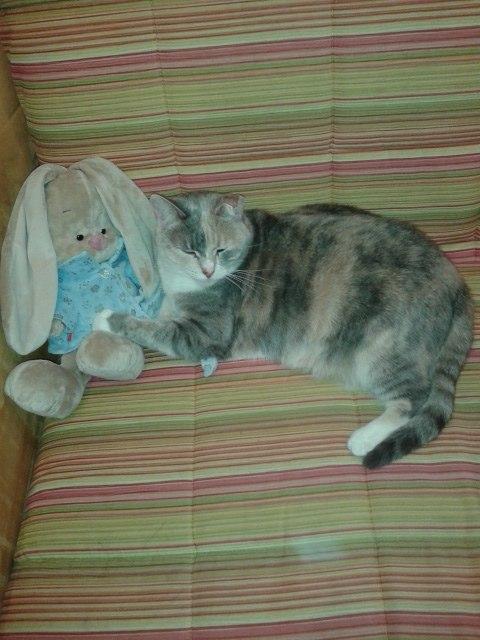 кошка с игрушкой