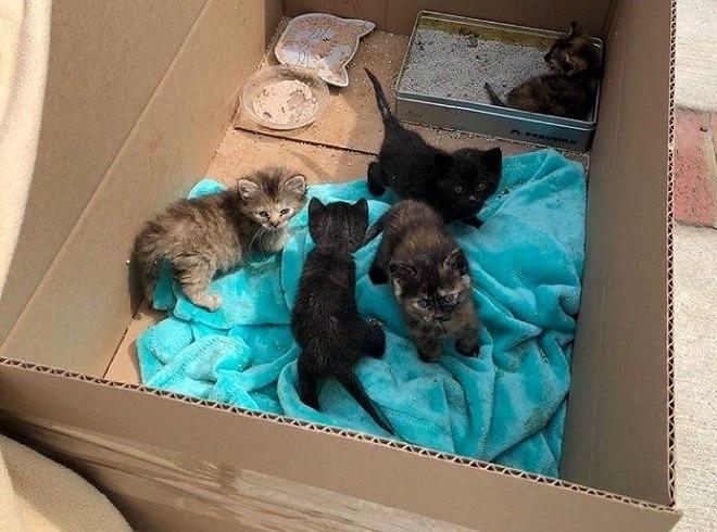 Котята в ящике