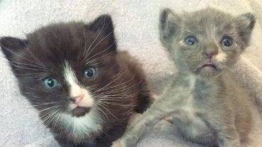 grey and black kittens