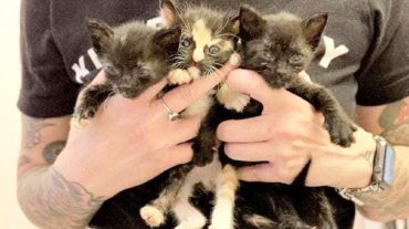 kitties in the hands
