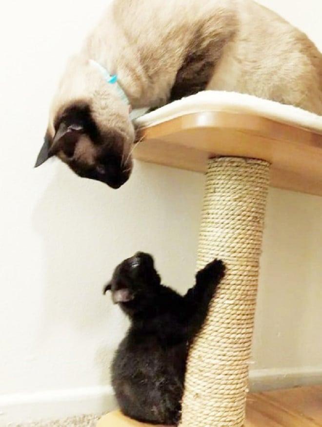 Кошка играет с котенком