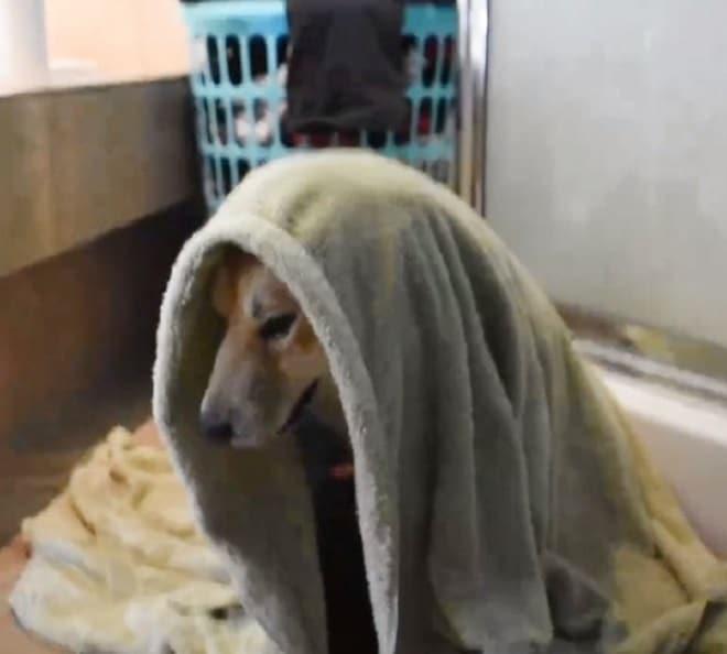 Собака в полтенце