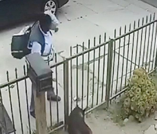 Почтальон и пес