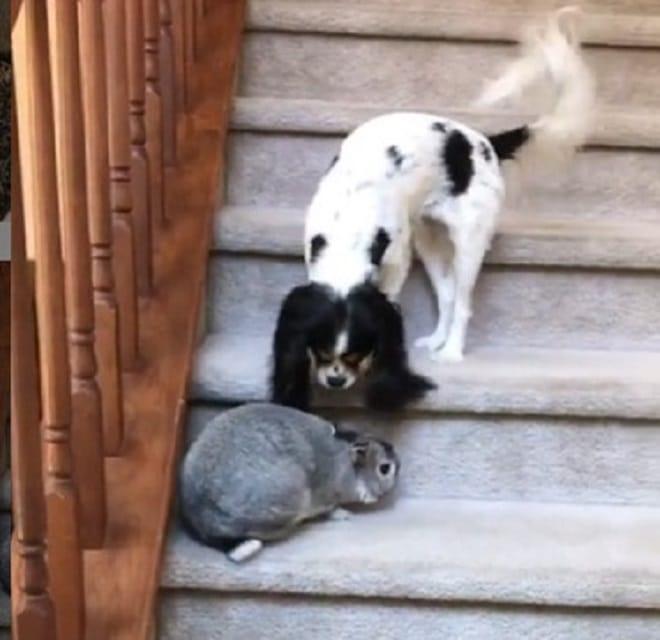 Животные на лестнице