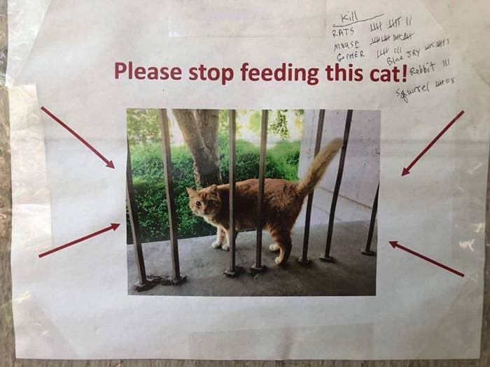 кот в объявлении