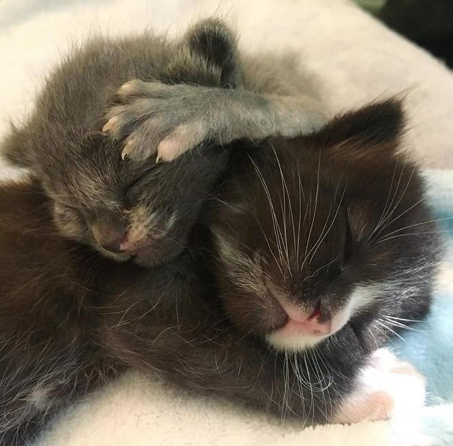 Котята спят