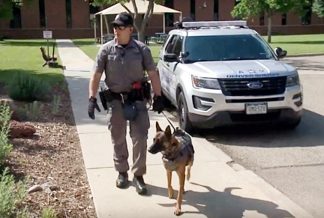 Собака с офицером