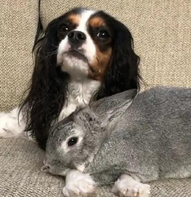 Крольчиха на лежит собачьих лапках