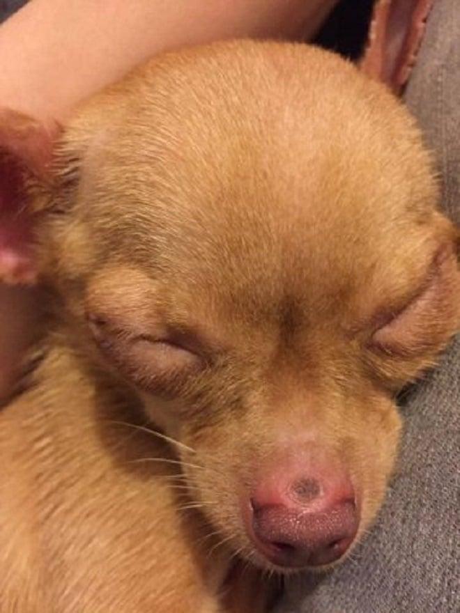 Собачка уснула