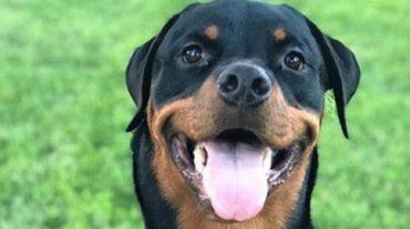 smiling pet