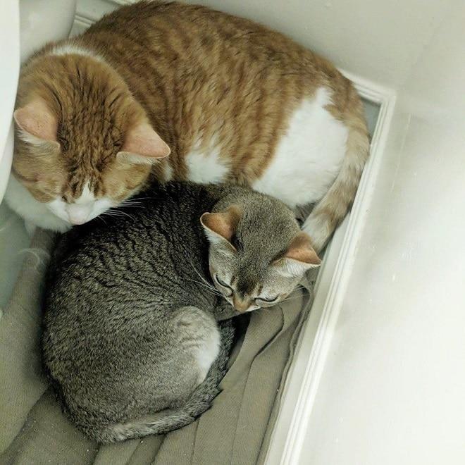 Коты лежат