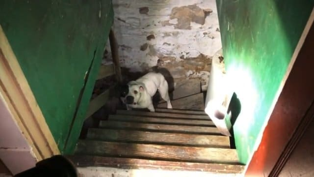 собака в подвале