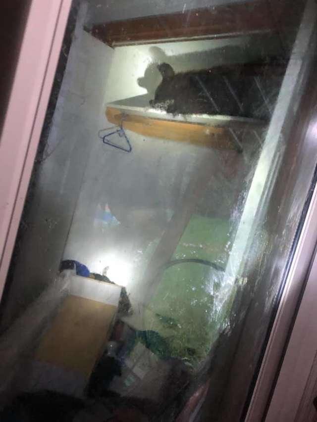 медведь в шкафу
