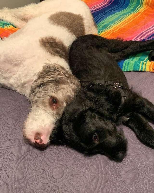 собаки на кровати