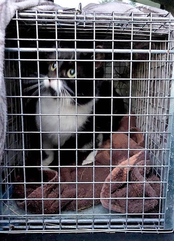 Кошка в клетке