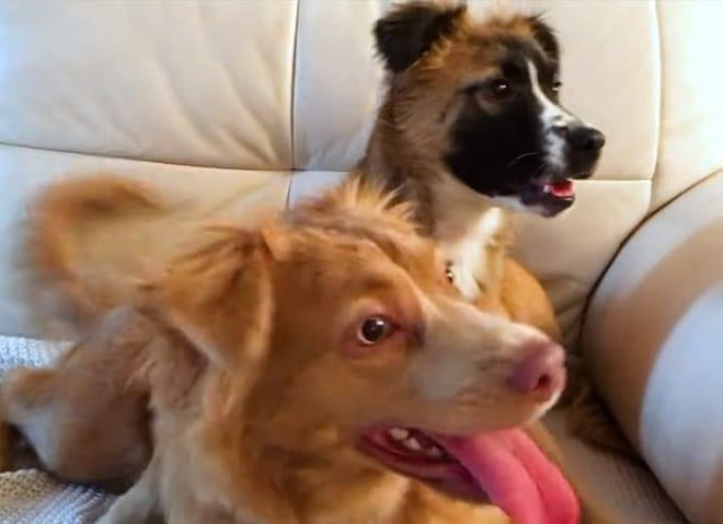 Собаки вдоме