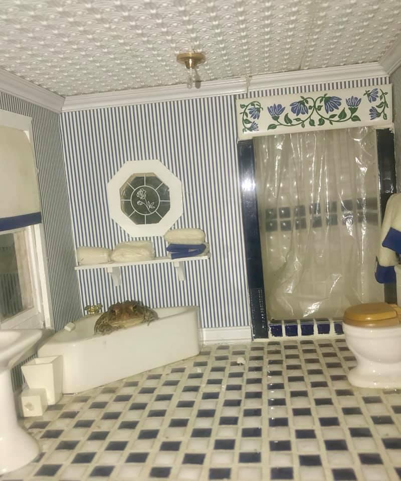 жаба в ванной
