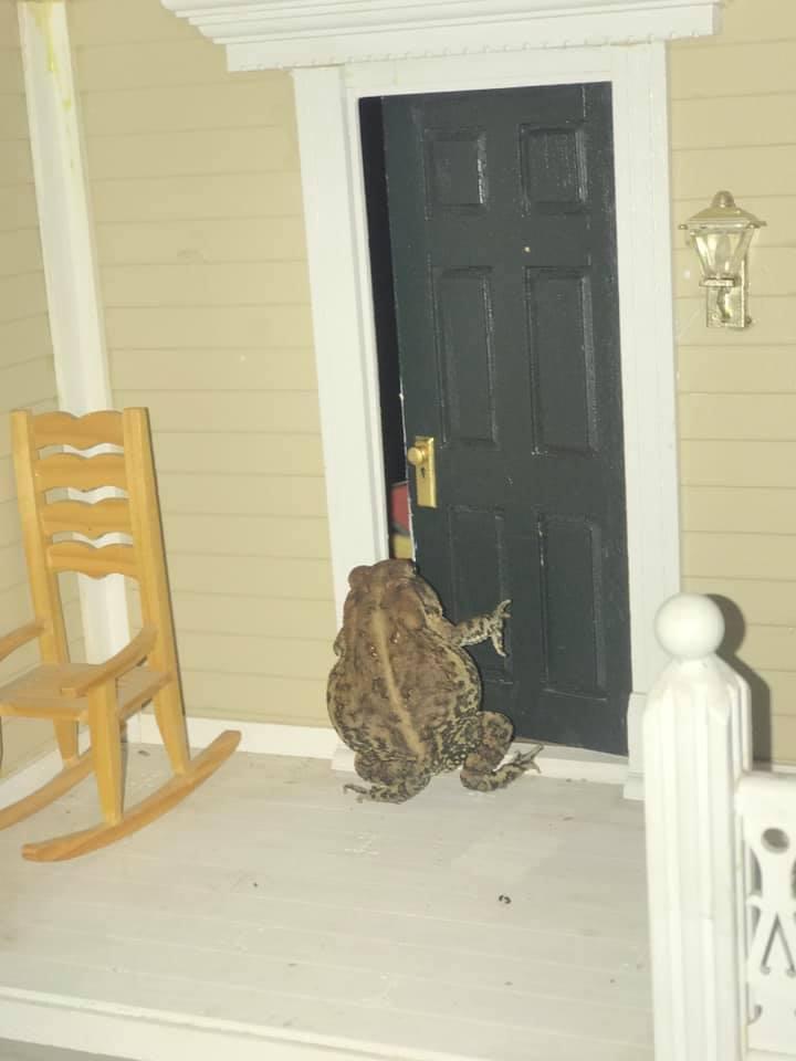 жаба в домике
