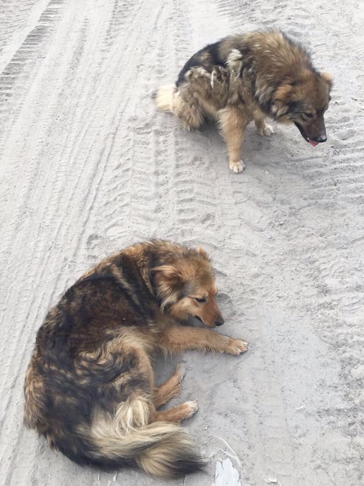 собаки на стройке