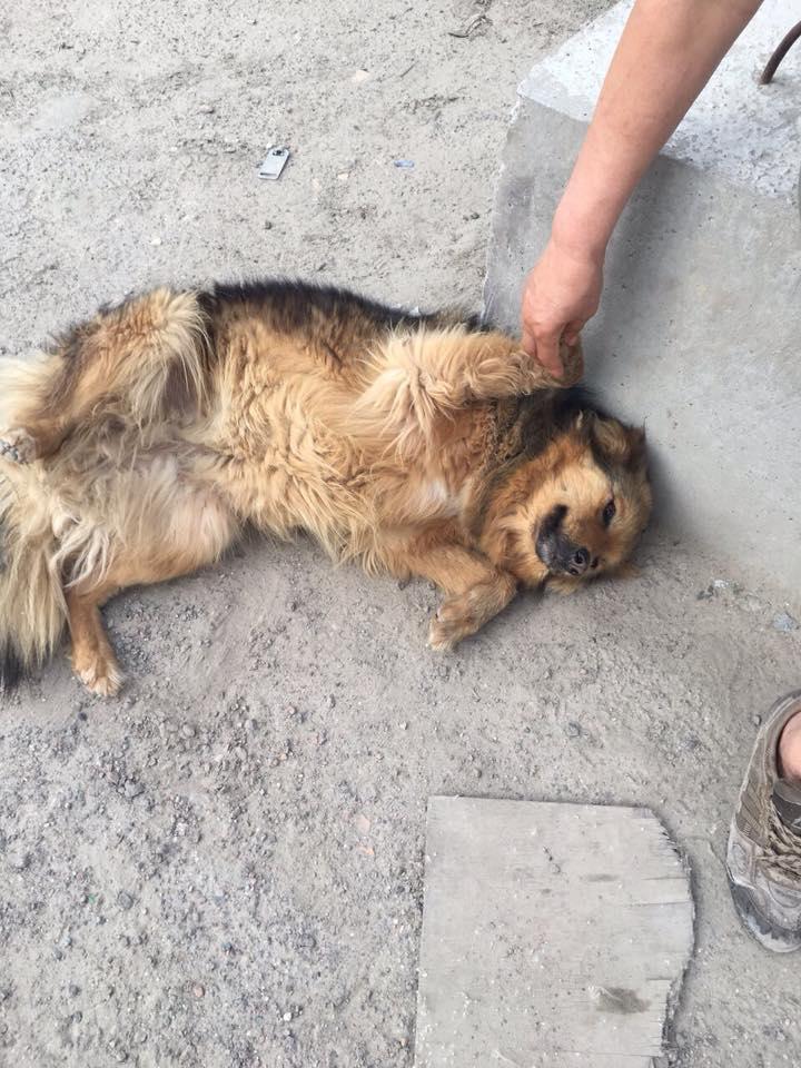 щенок на стройке