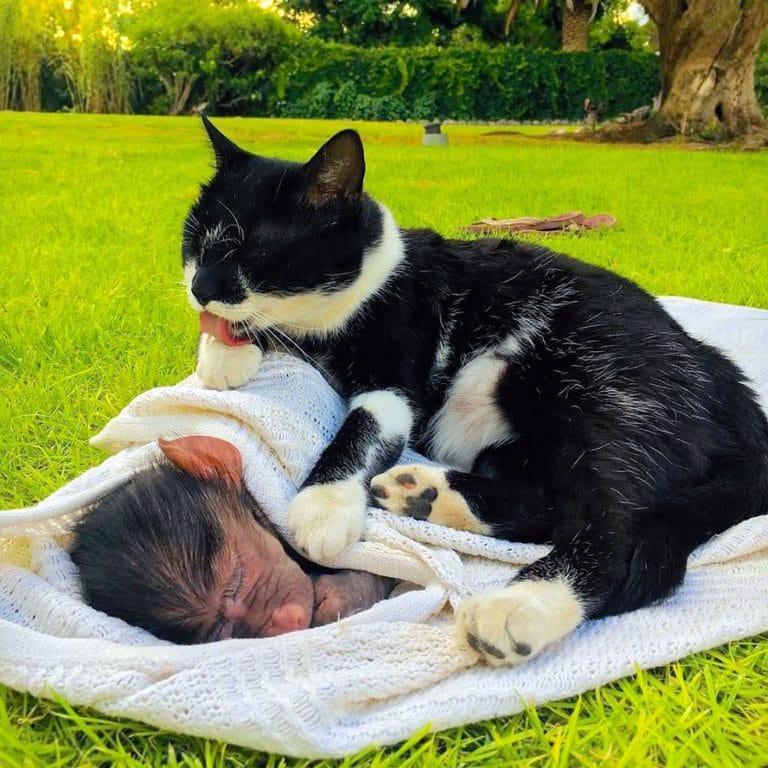 кошка и бабуин