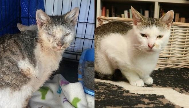 Кот до и после