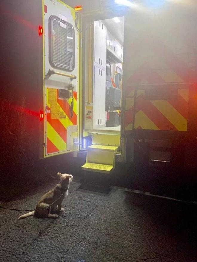 Собака возле скорой помощи